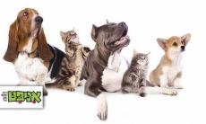 """דיל חובה לכל מי שיש בעלי חיים!! מכניסים שני שוברים לסל, משתמשים בקופון NEW2018 למשתמש חדש ומקבלים 200 ש""""ח למימוש בעלות של 70 ש""""ח בלבד ברשת אניפט!"""